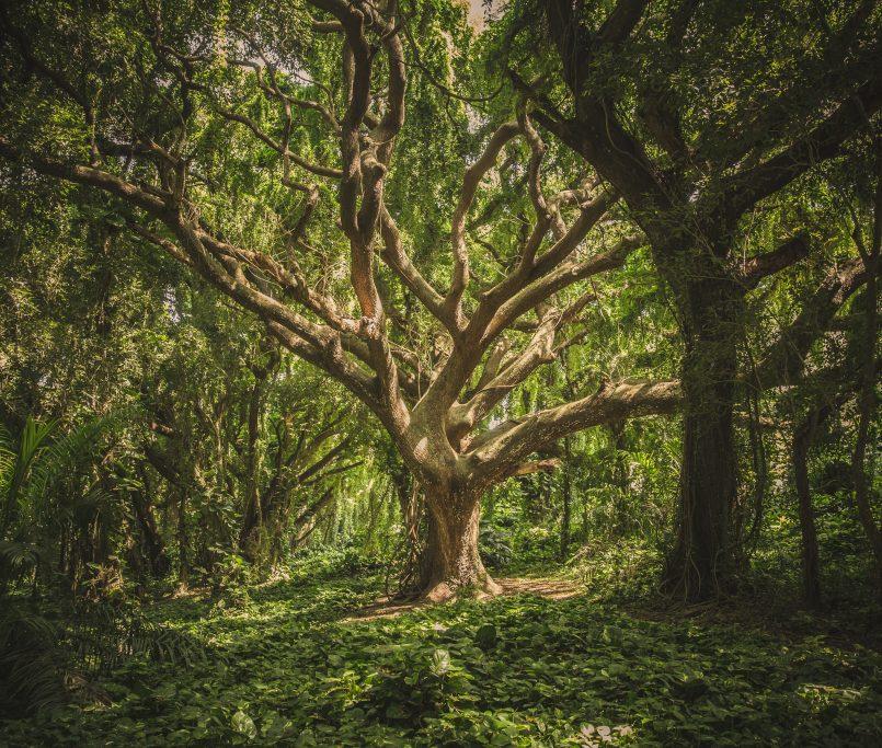 Communier avec l'esprit de l'arbre
