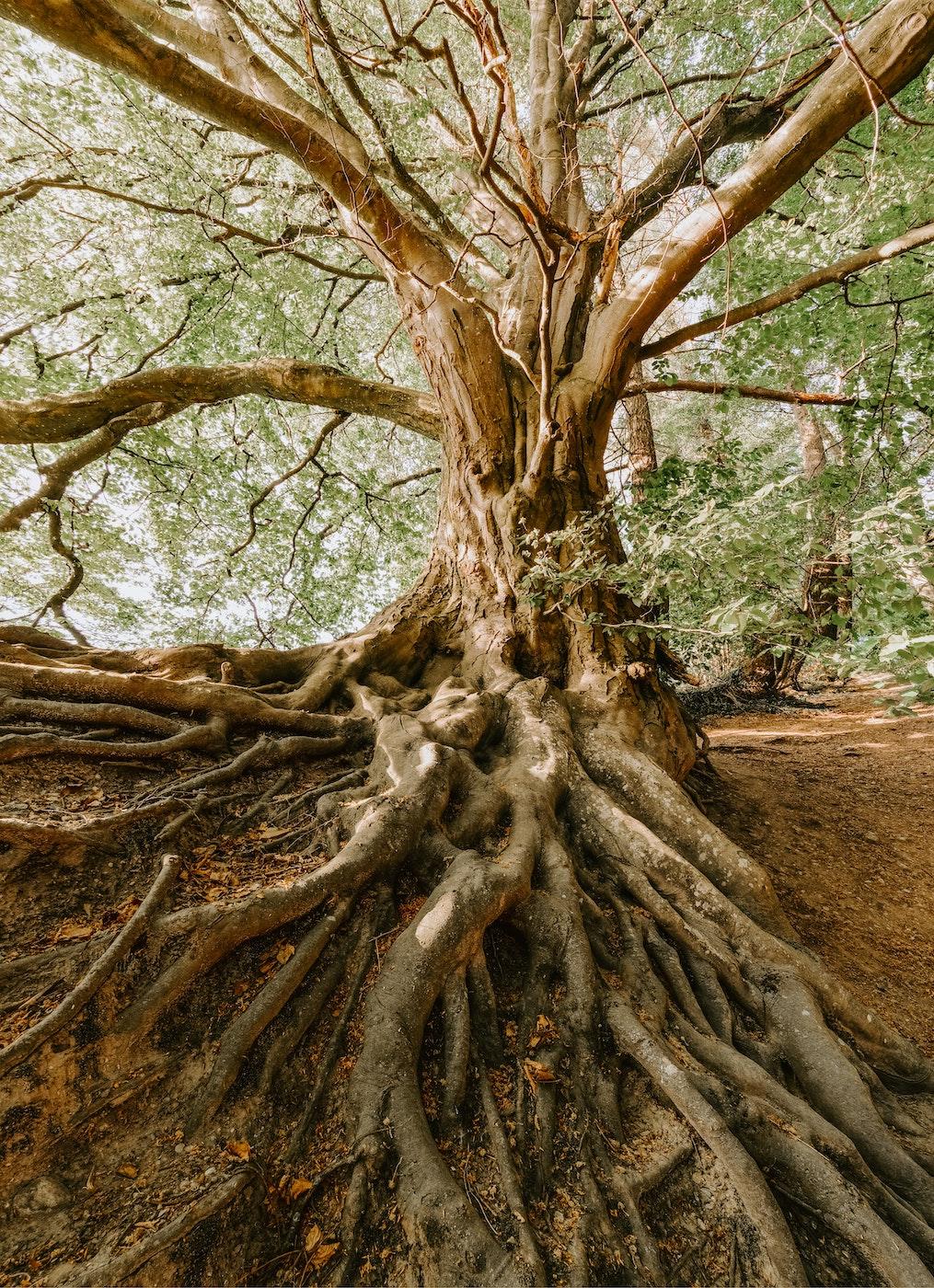 Communier avec l'esprit d'un arbre
